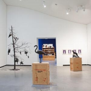 Blick in die Ausstellung Mark Dion, augewählte Werke, 2015